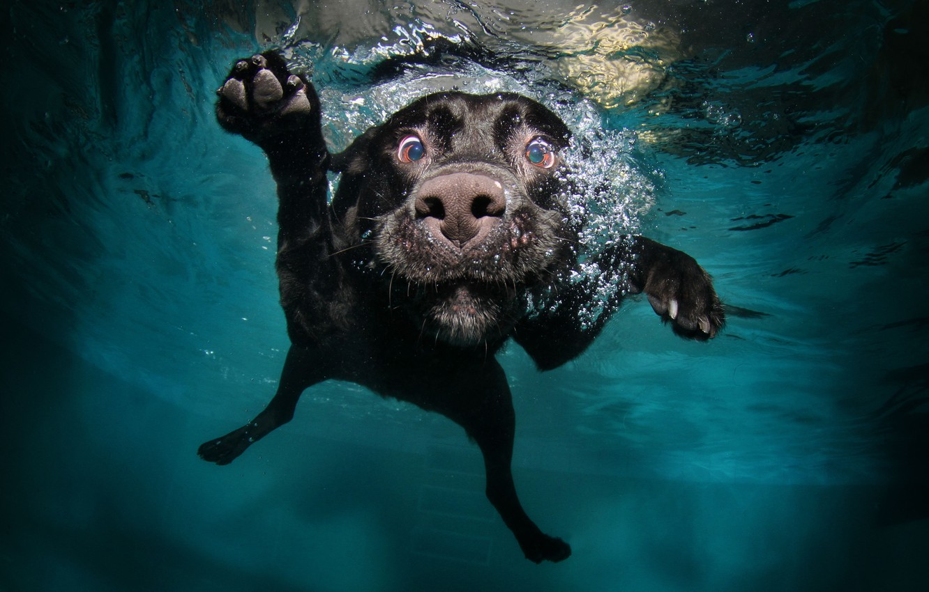 Photo wallpaper face, water, dog, paws, black, in the water, floats
