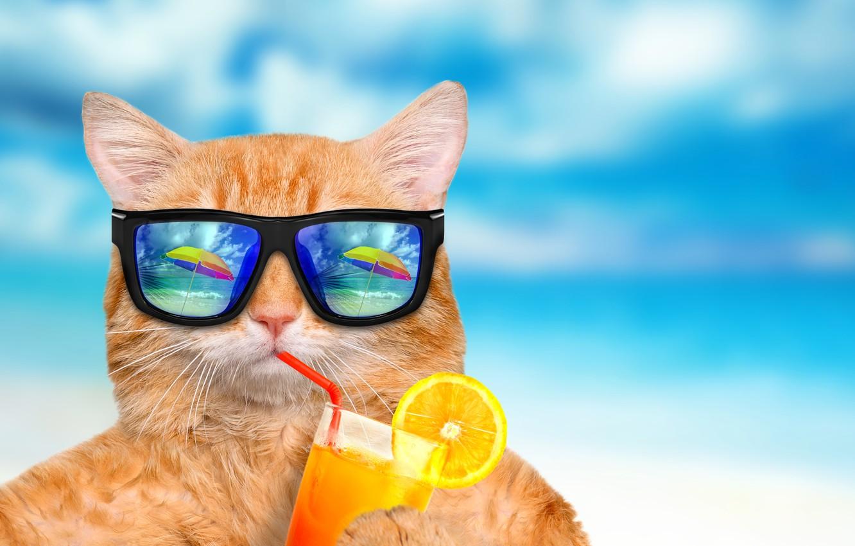 Photo wallpaper sea, cat, reflection, blue, background, orange, humor, umbrella, juice, red, glasses, cocktail, tube, bokeh