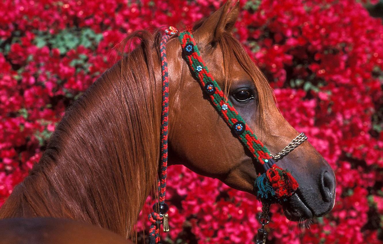 Wallpaper Flowers Red Horse Foliage Horse Images For Desktop Section Zhivotnye Download