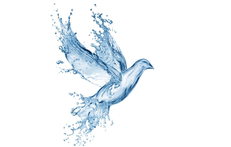 Photo wallpaper water, drops, squirt, creative, figure, dove, splash, art, Water, art, splash, drops, dove, pigeon, drawing, …