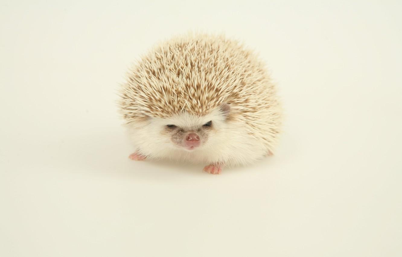 Photo wallpaper light, background, hedgehog