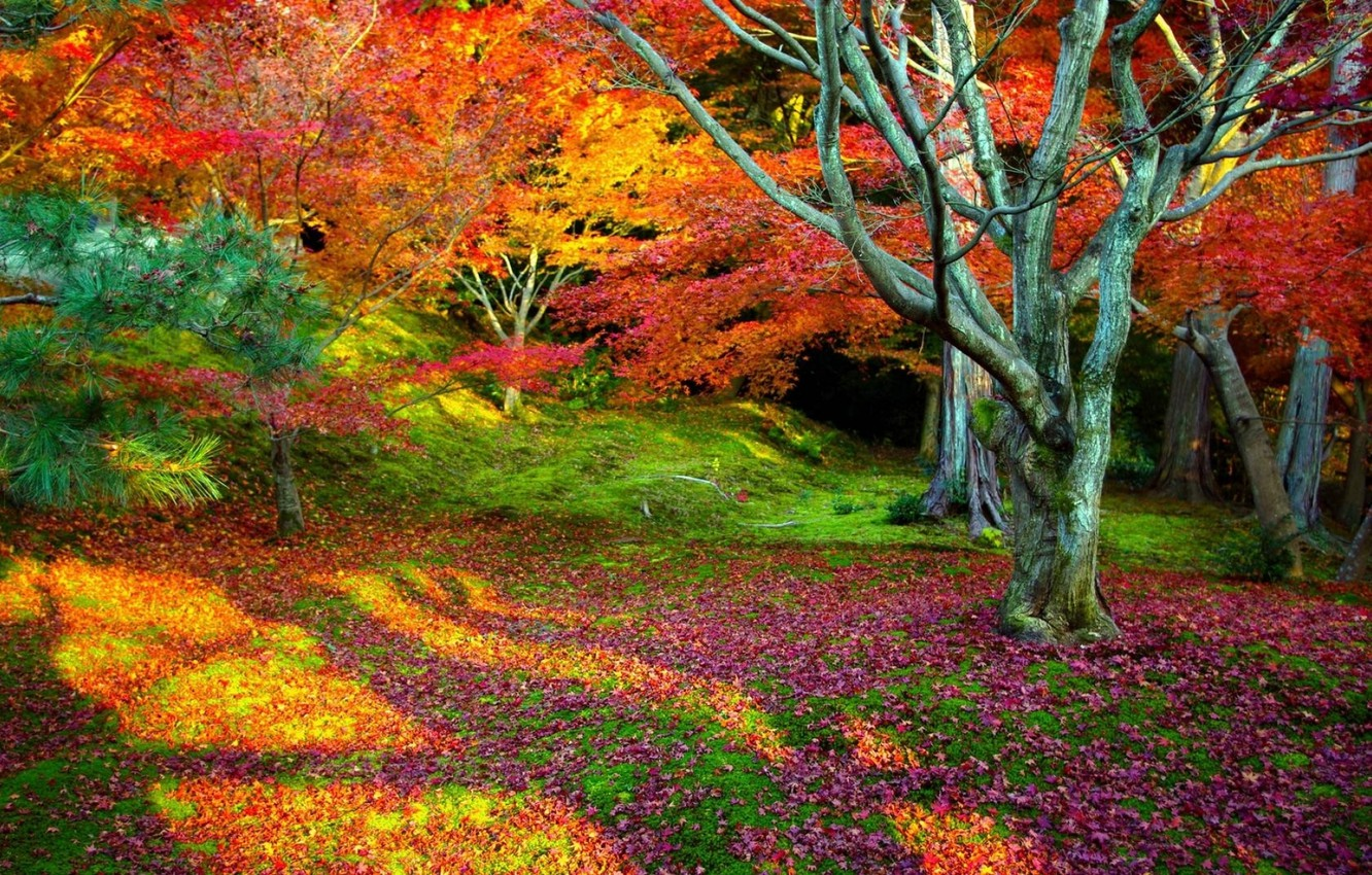 Photo wallpaper autumn, leaves, trees, landscape, nature, background, tree, beauty, bright, falling leaves, colorful