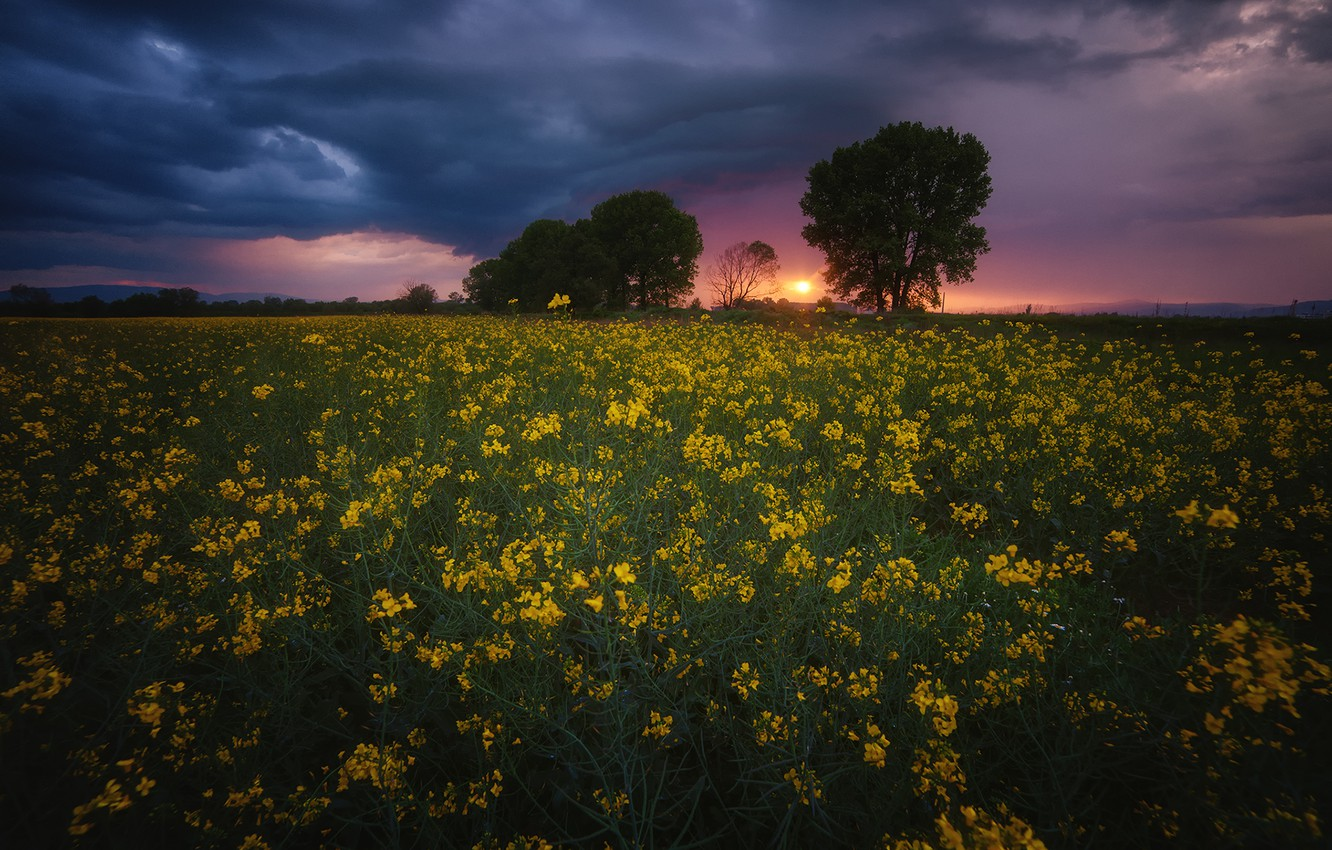 Photo wallpaper field, the sky, clouds, landscape, sunset, flowers, nature