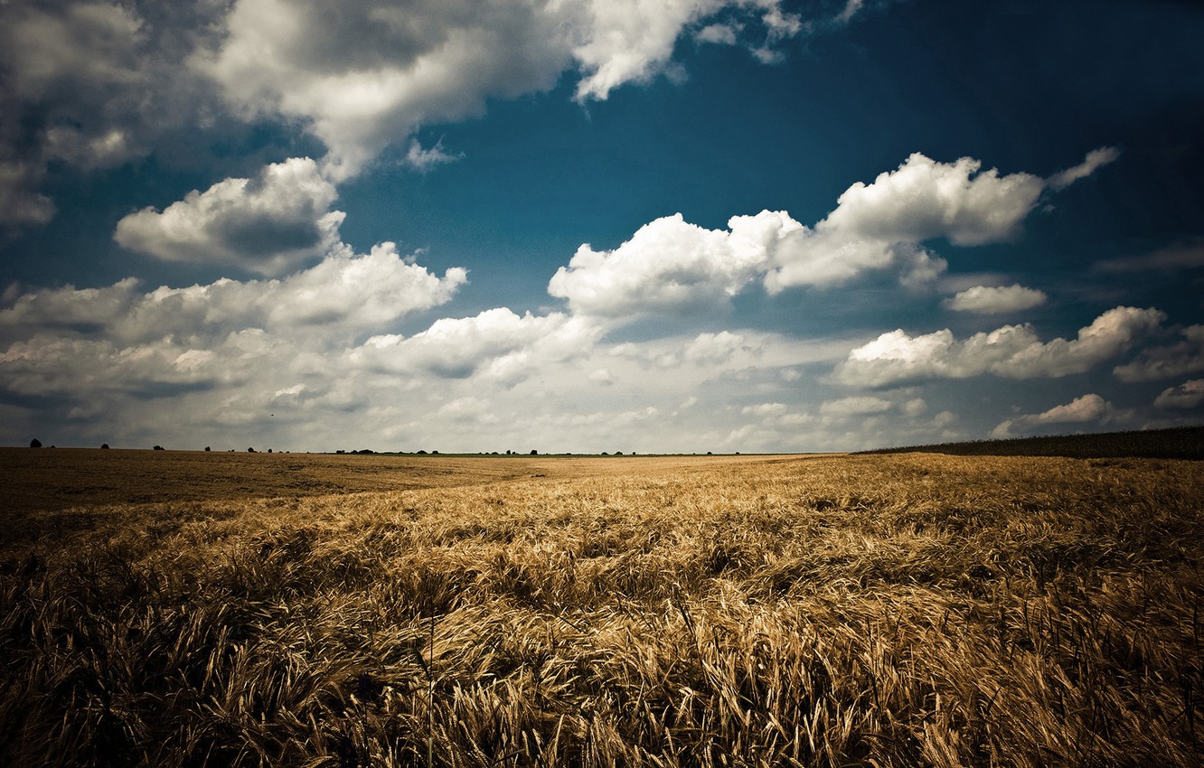 Photo wallpaper field, summer, the sky, clouds, landscape, nature, ears, blue