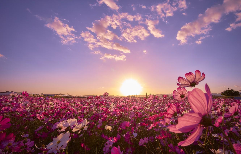 Photo wallpaper field, space, sunset, Japan, kosmeya