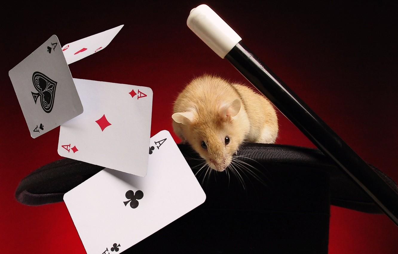 Photo wallpaper card, focus, mouse
