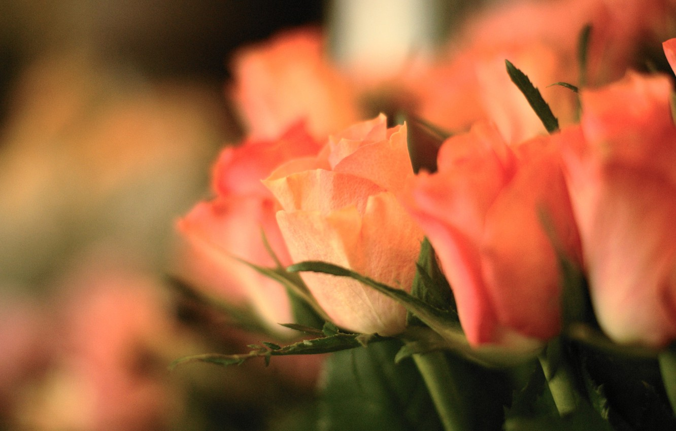 Photo wallpaper flowers, roses, bouquet, focus, pink