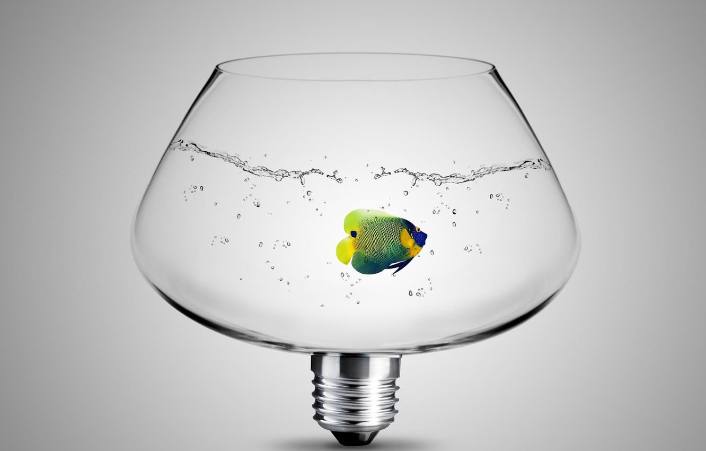 Photo wallpaper glass, light bulb, water, fish