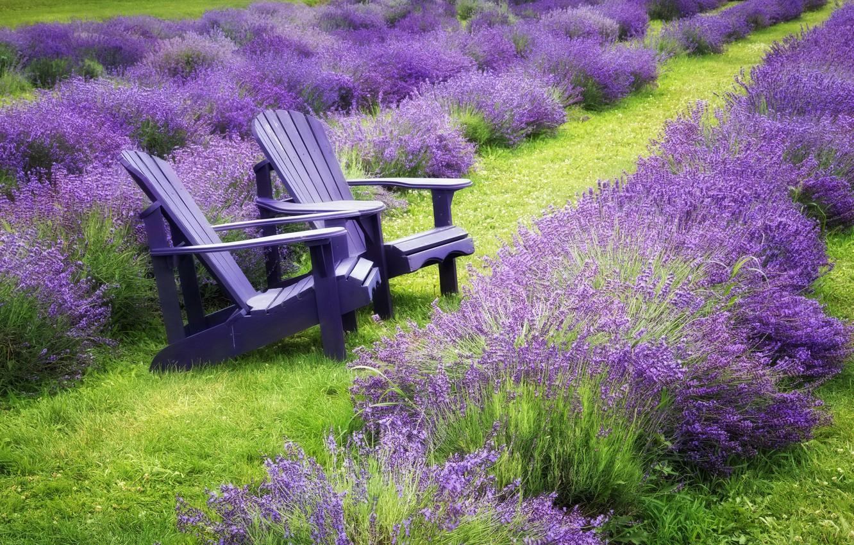 Photo wallpaper summer, bench, lavender