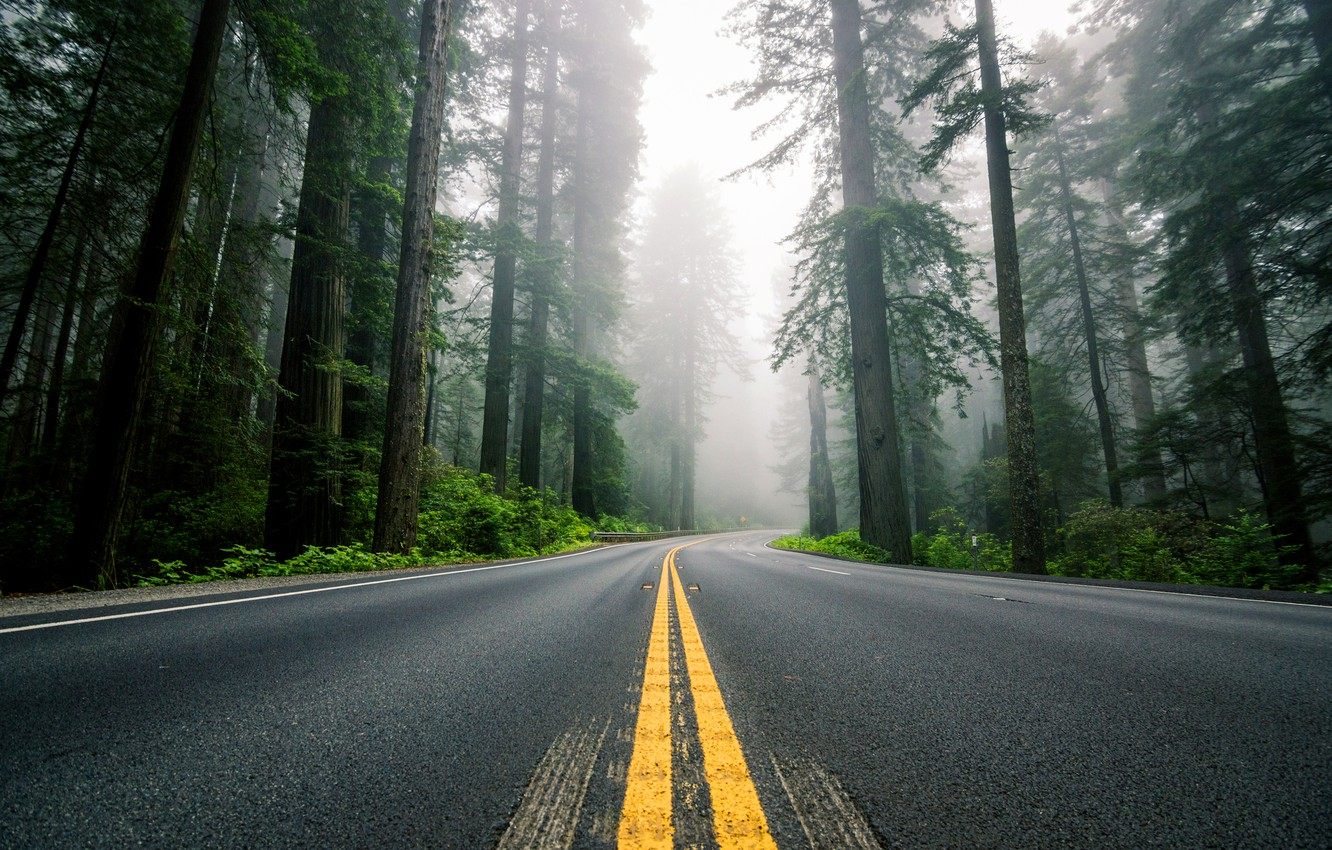 Photo wallpaper road, forest, trees, nature, fog, markup, highway, USA, North America, Sequoia