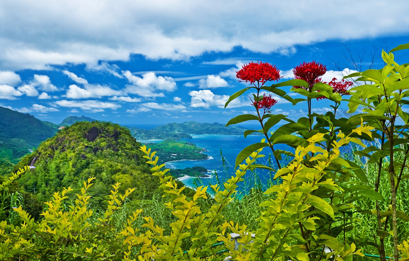 Photo wallpaper clouds, trees, landscape, flowers, mountains, nature, shrubs