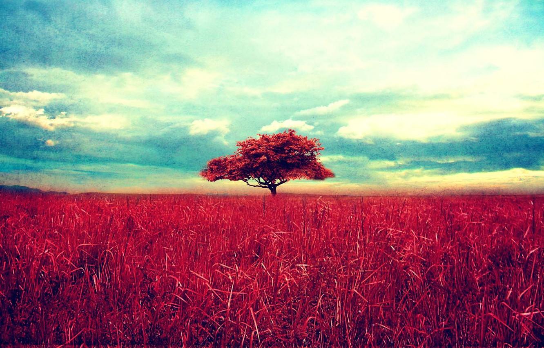 Photo wallpaper the sky, grass, clouds, landscape, nature, tree, grass, sky, landscape, nature, 1920x1200, clouds, tree