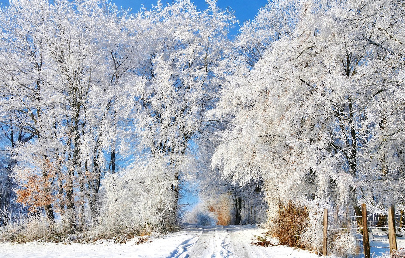Photo wallpaper winter, frost, road, snow, trees, traces, the fence