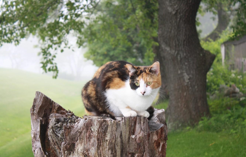 Photo wallpaper cat, nature, tree, stump, sitting