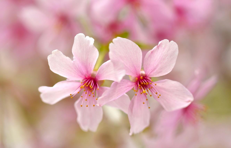 Photo wallpaper flowers, nature, paint, petals