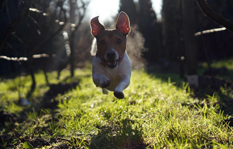 Photo wallpaper look, each, dog, running