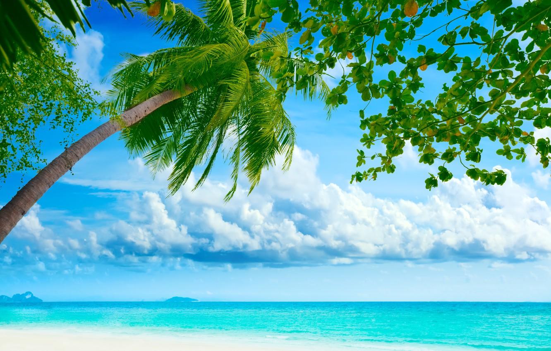 Photo wallpaper sea, beach, the sky, clouds, landscape, nature, palm trees, shore, beach, sky, sea, landscape, nature, …