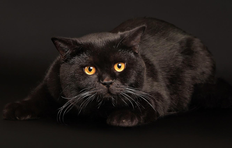 Photo wallpaper eyes, cat, dark, lies