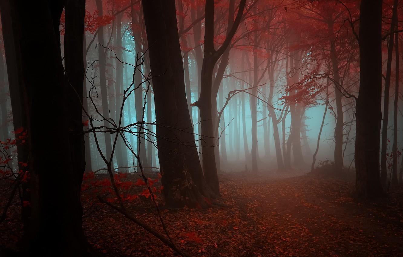 Photo wallpaper autumn, forest, leaves, trees, orange, red, fog