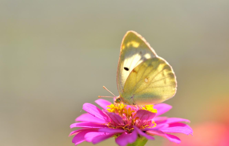 Photo wallpaper flower, macro, butterfly