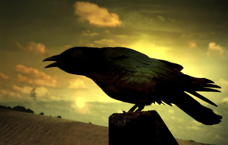 Photo wallpaper Field, Raven, mystic