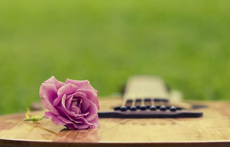Photo wallpaper summer, grass, rose, guitar, clearing