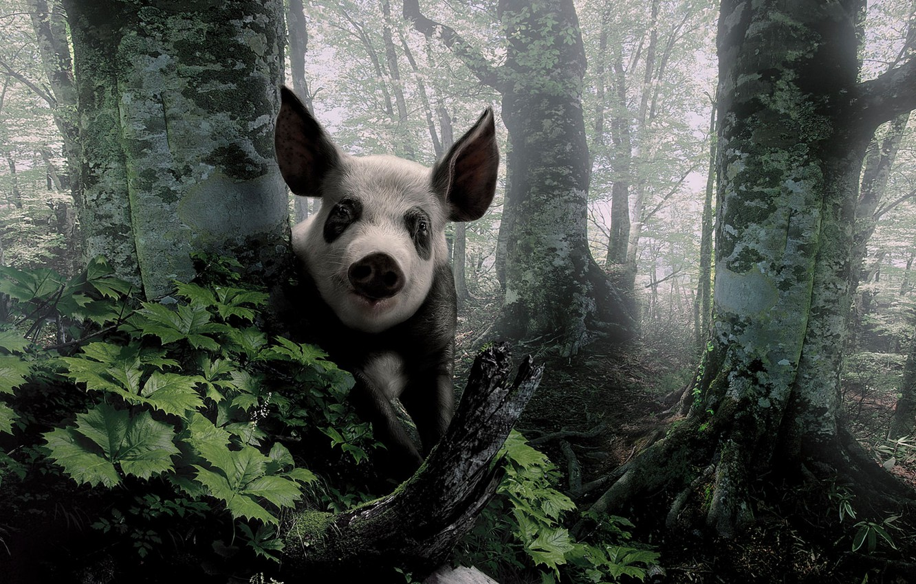 Photo wallpaper forest, look, trees, ears, Peeps, pig
