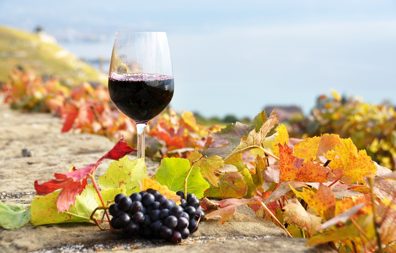Photo wallpaper autumn, leaves, wine, red, glass, grapes, the vineyards
