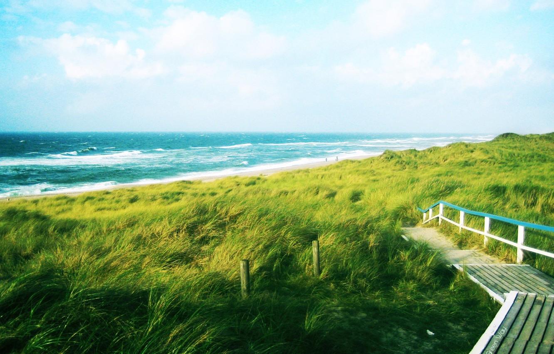Photo wallpaper road, sea, wave, greens, the way