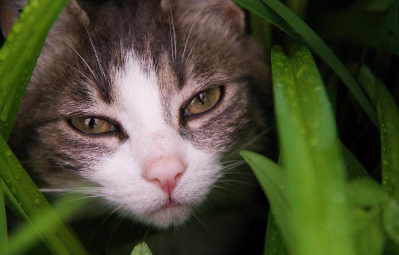 Photo wallpaper grass, eyes, cat, look, Koshak