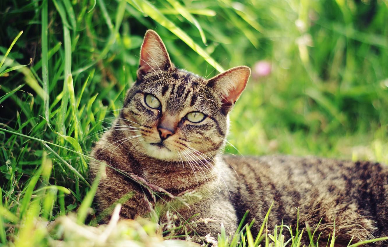 Photo wallpaper cat, mustache, face, Koshak, lies, weed, Tomcat