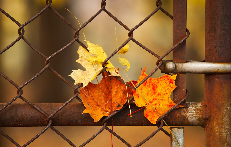 Photo wallpaper leaves, macro, the fence