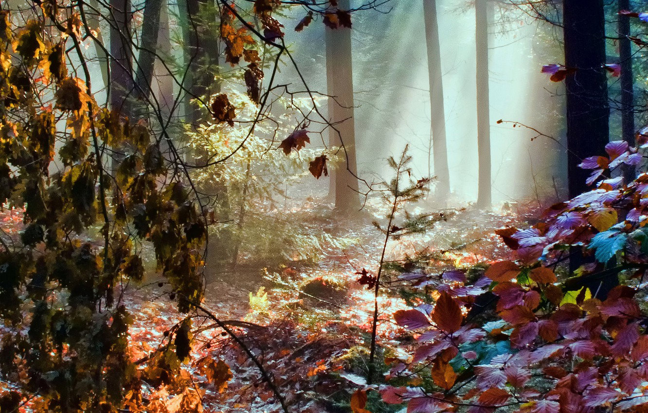 Photo wallpaper autumn, forest, leaves, rays, light, trees, color, rainbow