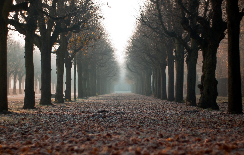 Photo wallpaper autumn, the city, street