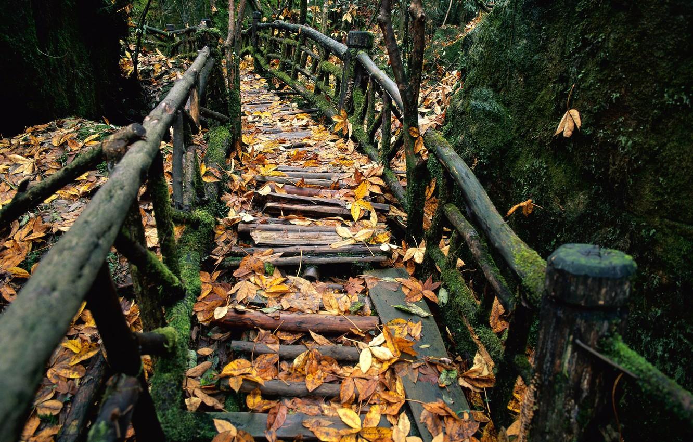 Photo wallpaper autumn, moss, railings