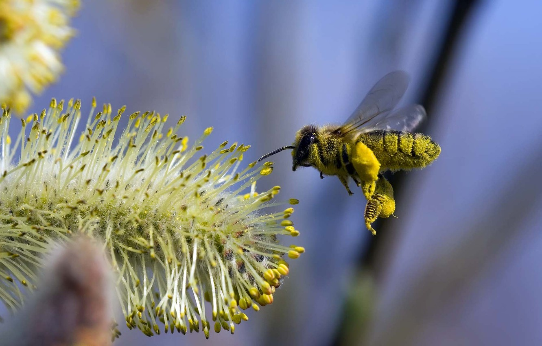 Photo wallpaper flower, flight, bee