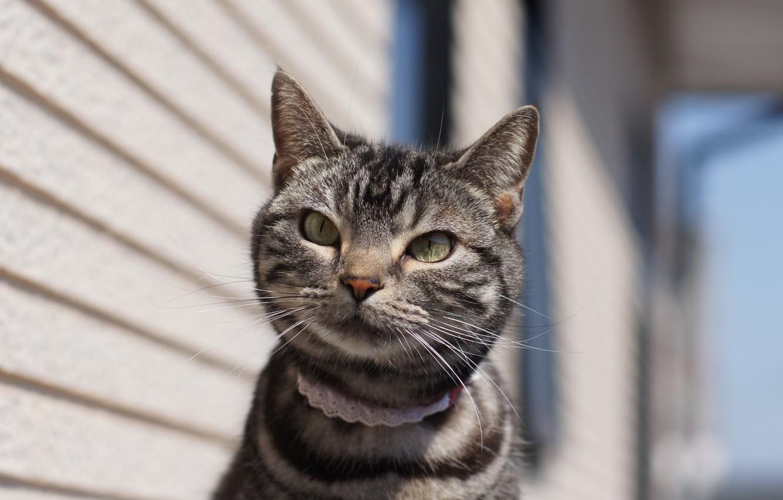 Photo wallpaper cat, eyes, look, background