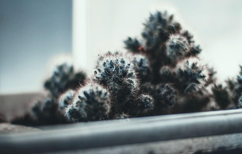 Photo wallpaper light, needles, needle, plant, cactus, barb, window, cool colors
