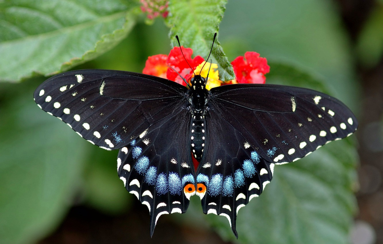 Photo wallpaper butterfly, beautiful, sitting, bright, swallowtail, on the flower, rossom