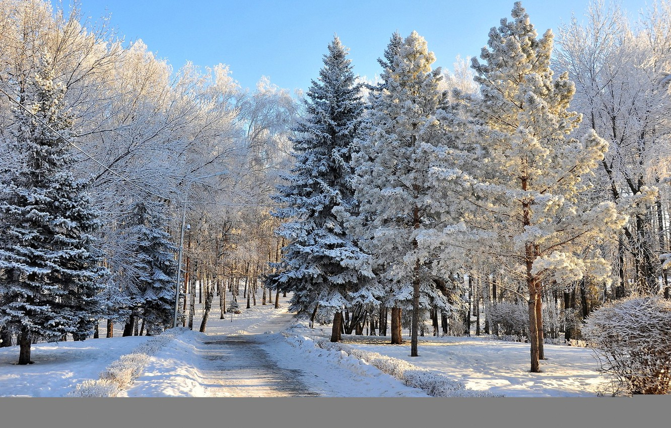 Photo wallpaper photo, Nature, Winter, Trees, Snow, Forest