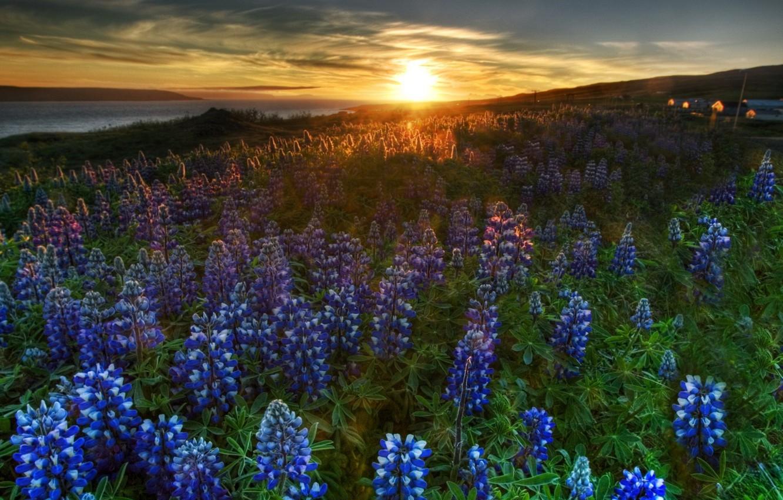 Photo wallpaper landscape, sunset, flowers