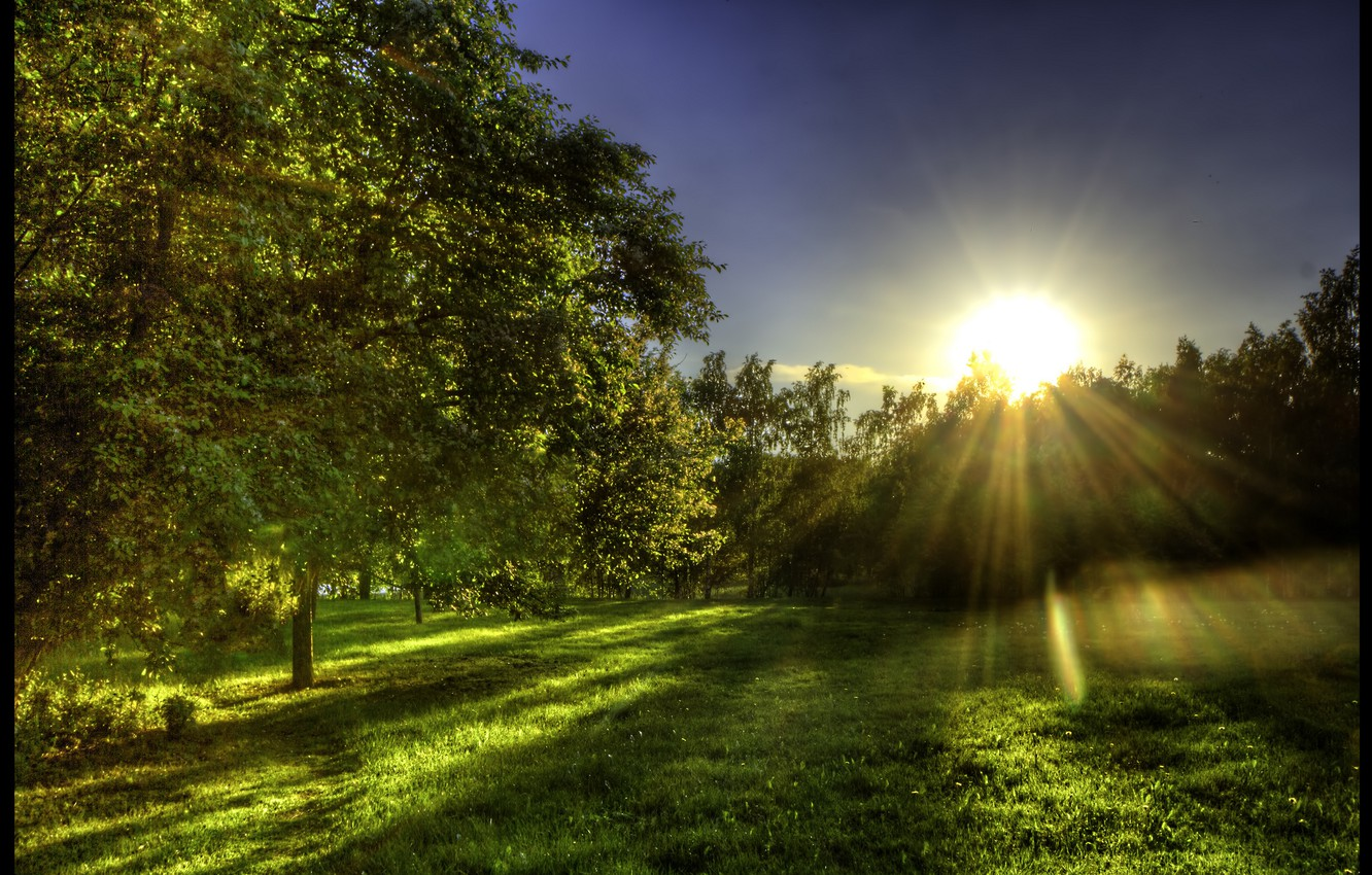 Photo wallpaper greens, forest, grass, the sun, rays, glade, spring, morning