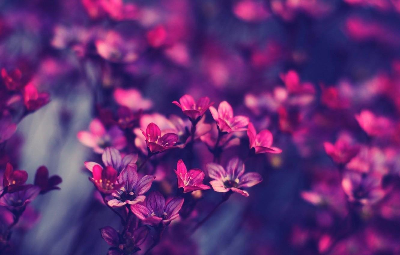 Photo wallpaper macro, flowers, photo, lilac