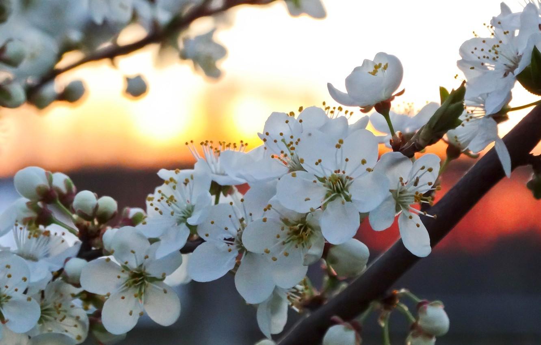 Wallpaper Nature Flower Beauty Scenery Images For Desktop Section Pejzazhi Download