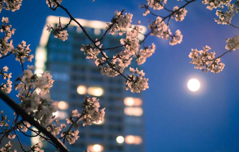 Photo wallpaper macro, the city, lights, the moon, color, branch, spring, the evening, Japan, Sakura, Tokyo