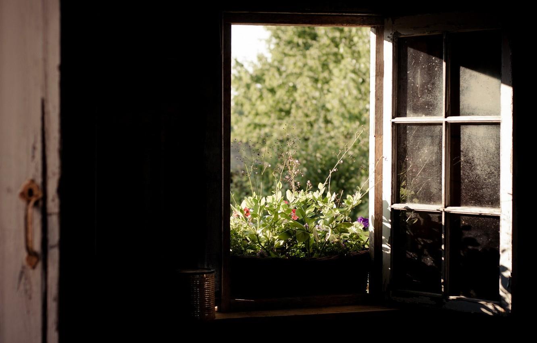 Photo wallpaper nature, room, window