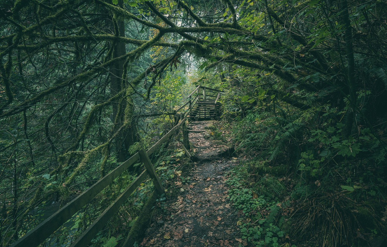Photo wallpaper forest, trees, path, Washington, Washington, Green River Gorge, River gorge, green river