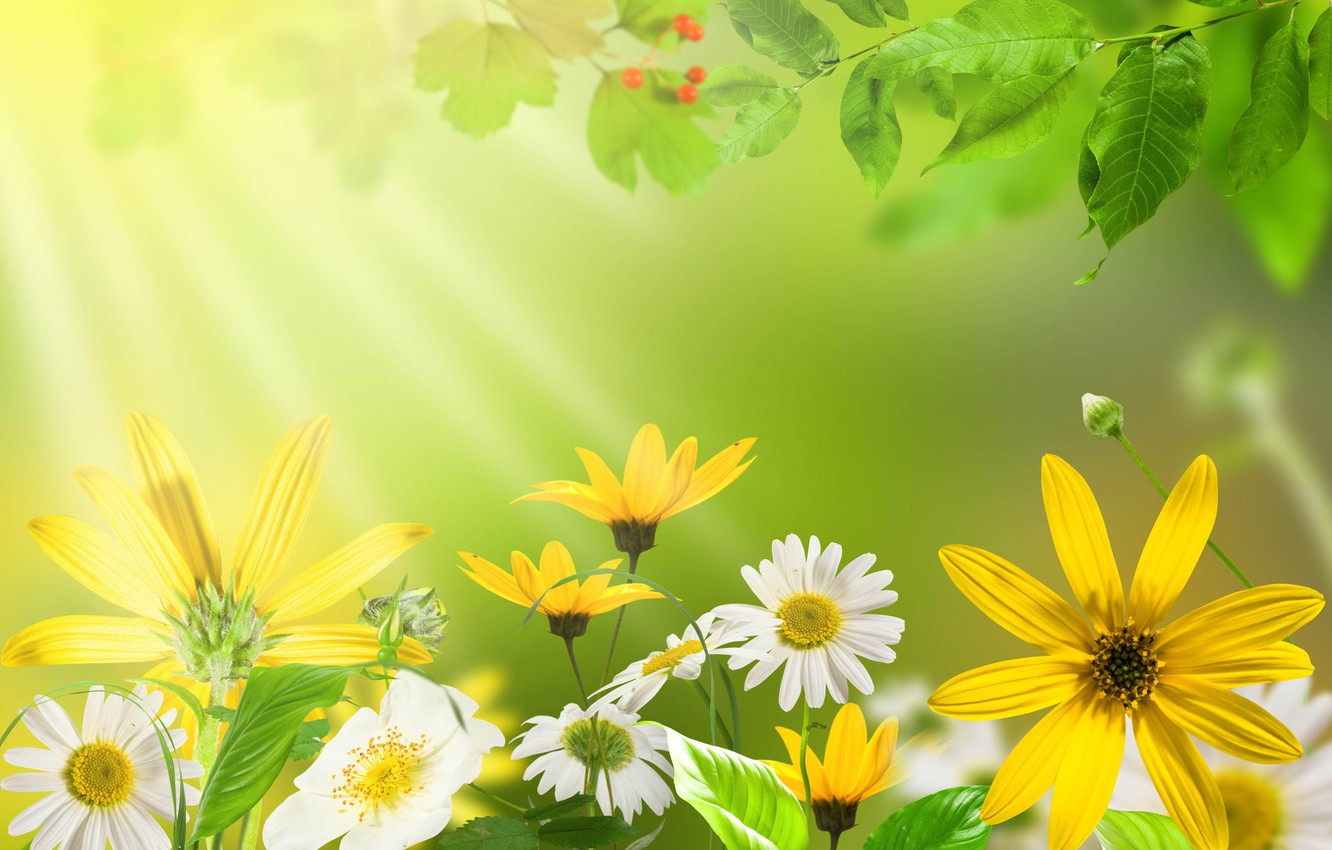 Photo wallpaper summer, leaves, flowers, yellow, nature, green, Daisy, bright, colorful