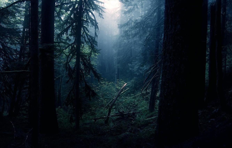 Photo wallpaper forest, light, night
