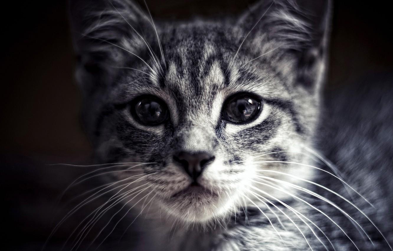 Photo wallpaper animals, eyes, Cats